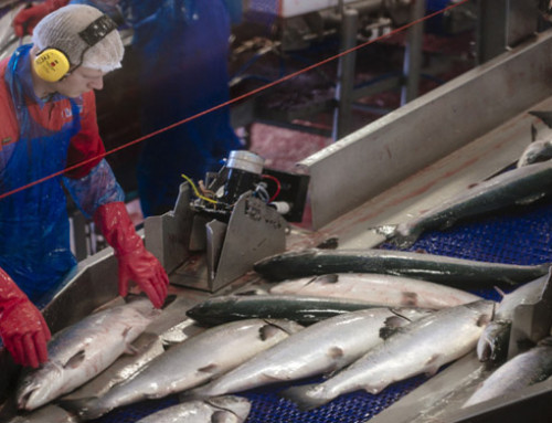 Norway hopes for early FTA deal with China to hike seafood exports