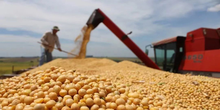 Soybean oligosaccharides